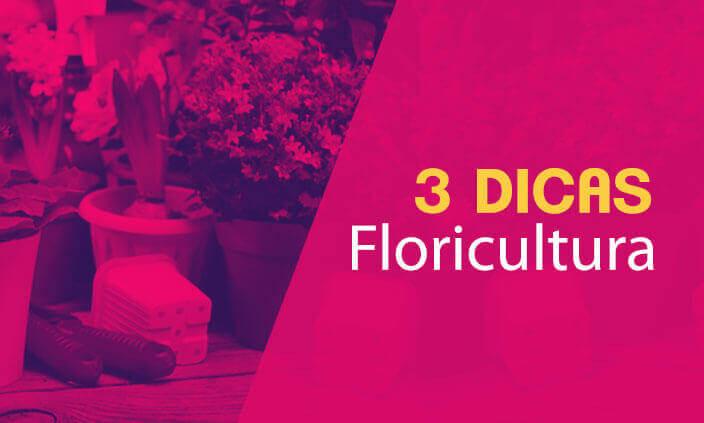Imagem - 3 dicas inspiradoras para sua floricultura